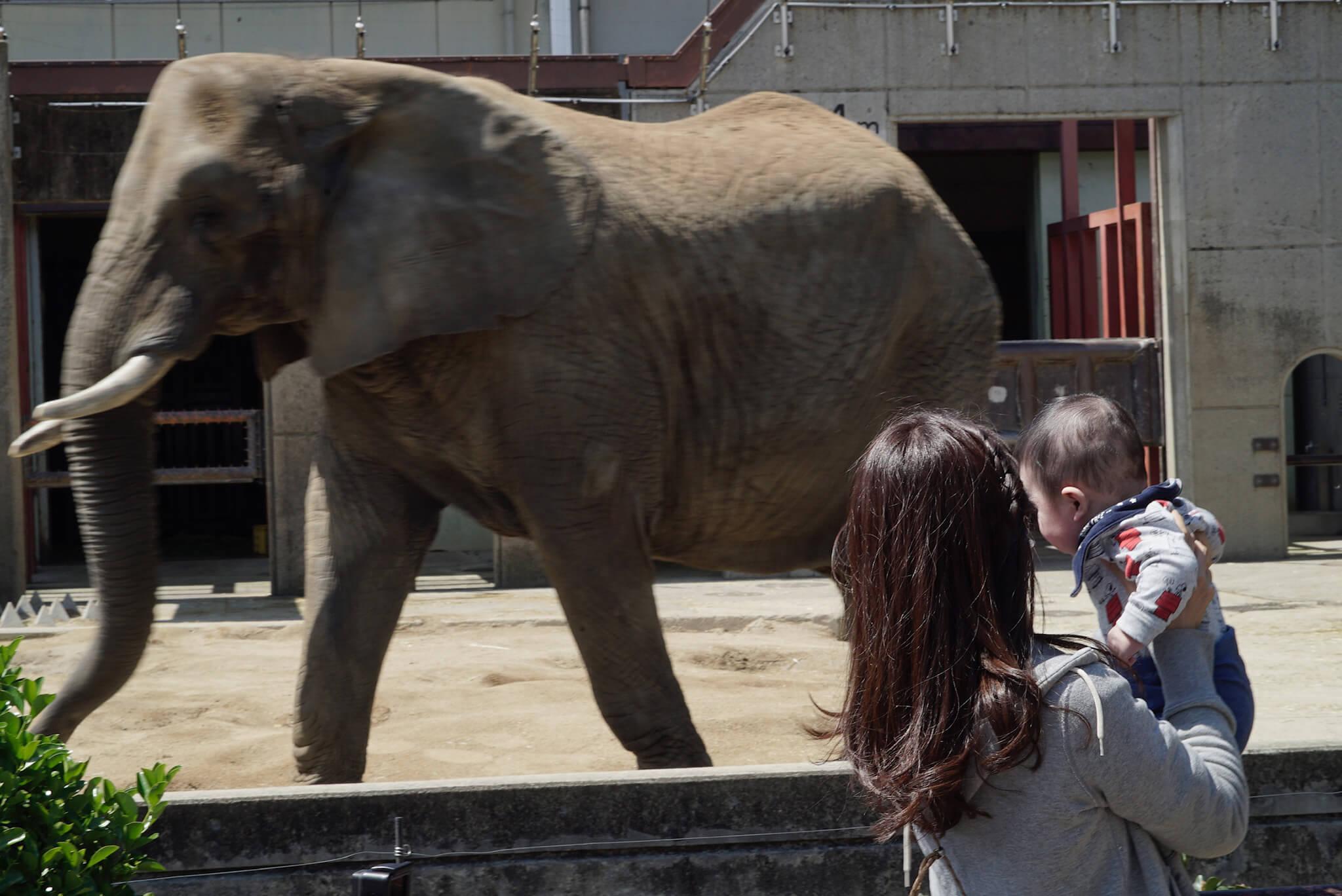 とべ動物園の象