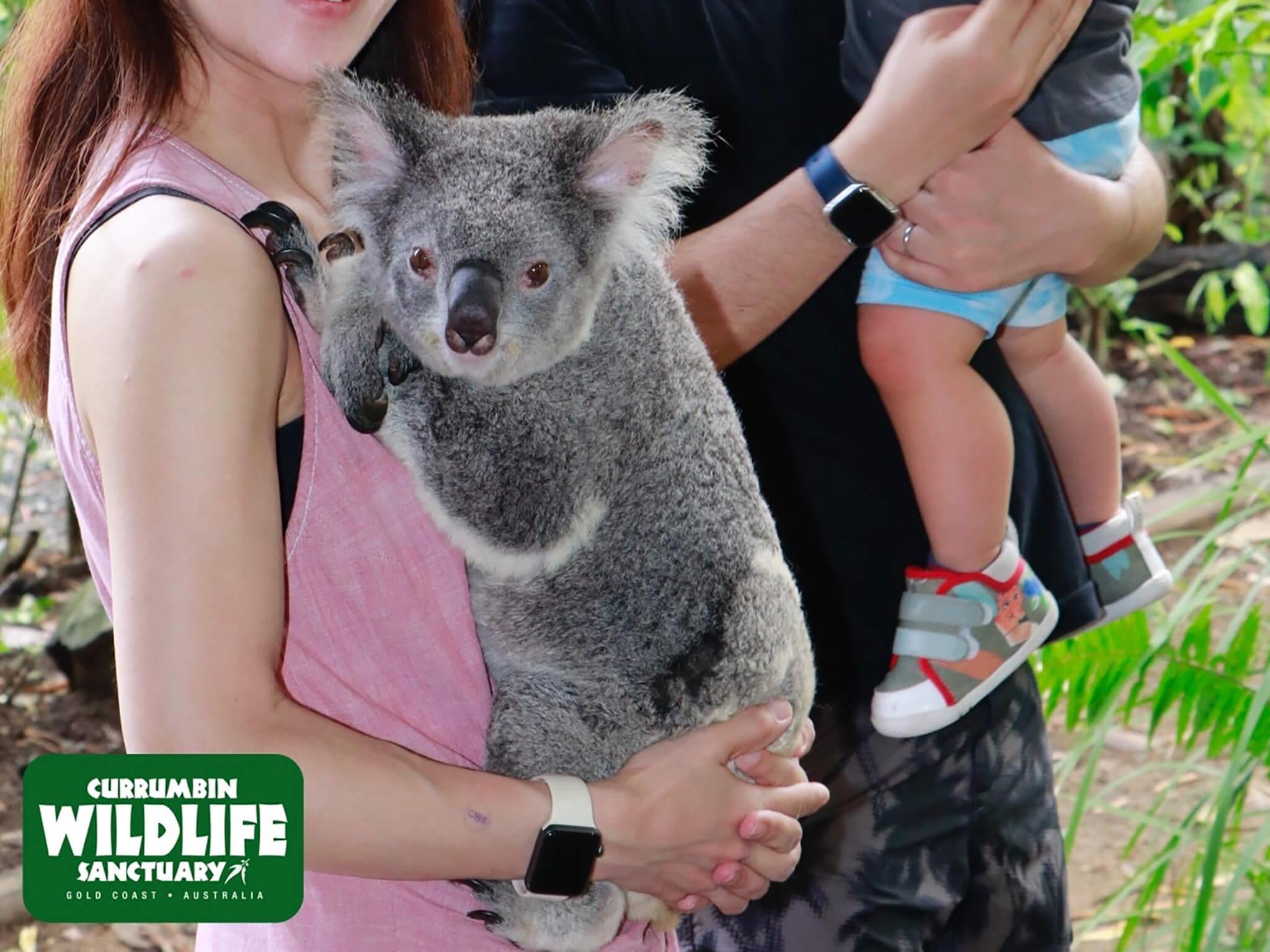 カランビンではコアラと撮影も